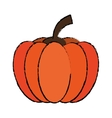 drawing pumpkin harvest bittersweet vegetable icon vector image