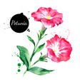 hand drawn watercolor petunia flower painted vector image vector image