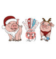 pigs in christmas costumes vector image