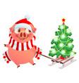 pink pig symbol of 2019 year fun pig sled vector image
