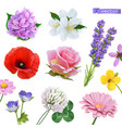 spring flowers lilac jasmine poppy rose lavender vector image vector image