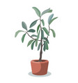 indoor tree plant greenery for flat vector image