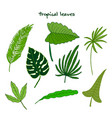 set green tropical leaves vector image