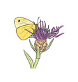 yellow butterfly on the flower vector image