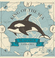 banner with big hand-drawn killer whale vector image vector image