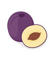 ripe purple plum cartoon style vector image