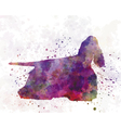 American Cocker Spaniel 01 in watercolor vector image