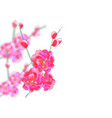 branches with delicate pink flowers and buds vector image vector image