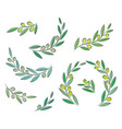 olive branch set with leaves and olives vector image