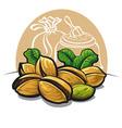 pistachios nuts vector image
