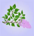 Twig Lilac with flowers and leaves vector image vector image