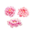 watercolor peony set vector image vector image