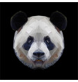 panda head polygon portrait isolated vector image