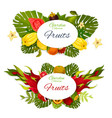 exotic fruits or berries with tropical palm leaves vector image vector image