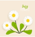 Meadow floral background vector image vector image