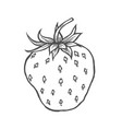 strawberry fruit organic vector image