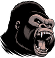 The fierce gorilla head vector image vector image