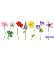 wildflowers 3d realistic icon set vector image vector image