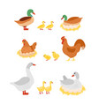 set poultry hen cock vector image