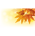 Beautiful autumn maple leaves vector image vector image