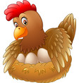 cute hen brooding her egg vector image