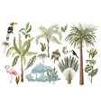 jungle animals flowers and trees isolated vector image vector image