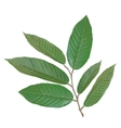Realistic branch with tropical leaves vector image vector image