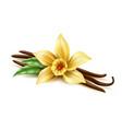 realistic vanilla flower dry bean sticks vector image vector image