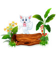 cute baby cat posing on tree trunk vector image vector image