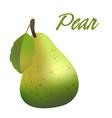 fruit pear white background image vector image