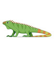 iguana lizard animal standing on a white vector image