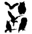 owls birds silhouette vector image