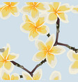 pattern background with plumeria flowers vector image vector image