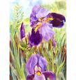 watercolor purple irises beautiful watercolor vin vector image vector image