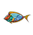 blue tank fish entangle with beautiful mix vector image vector image