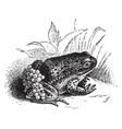 nurse frog vintage vector image vector image