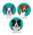short hair bulldog boxer dog and border collie vector image vector image