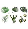 tropical plants leaves and palms set vector image