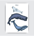 card with whale colorful vector image