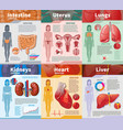 cartoon human internal organs infographic template vector image vector image