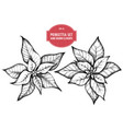 collection of hand drawn pionsettia vector image vector image