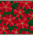 xmas poinsettia flowers seamless pattern vector image