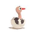 cute ostrich baby in broken egg shell vector image vector image
