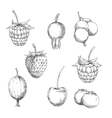 Fresh berry fruits sketches in engraving style vector image vector image
