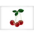 Cherries with leaves vector image vector image