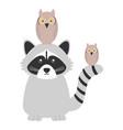cute raccoon and owls birds woodland animals vector image