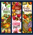exotic tropical fruits organic harvest sketch vector image vector image