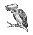 griffin vulture surveillance camera head sketch vector image