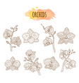 orchid flowers hand drawn set vector image vector image