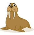 Walrus cartoon vector image